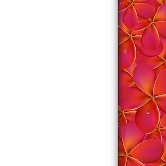 Witboek met roze frangipani, illustratie