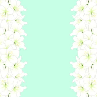 Witte amaryllis-rand