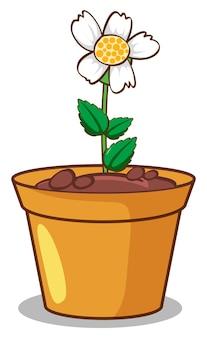 Witte bloem op witte achtergrond