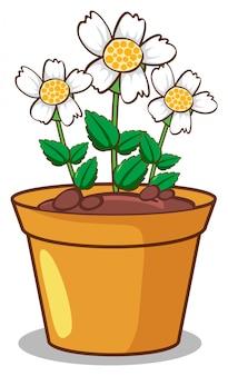 Witte bloemen op wit