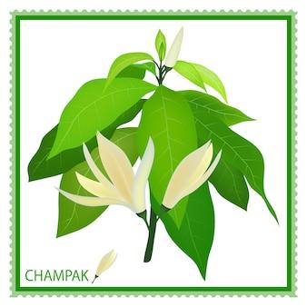 Witte champaka of magnolia champaca met groene bladeren op tak, hand getekende illustratie.