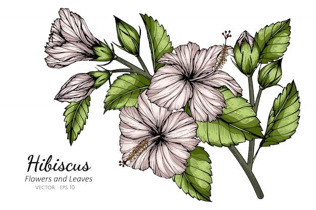 Witte hibiscusbloem en bladtekeningillustratie met lijnkunst op witte achtergronden.