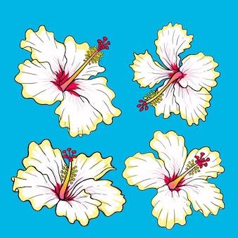 Witte hibiscusbloempakket voor verzameling
