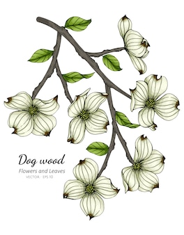 Witte kornoeljebloem en bladtekeningillustratie
