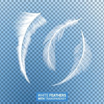 Witte pluizige veren realistisch transparant effect