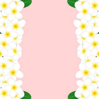 Witte plumeria-rand