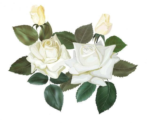 Witte rozen bloemen boeket vectorillustratie