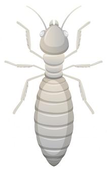 Witte termiet witte achtergrond