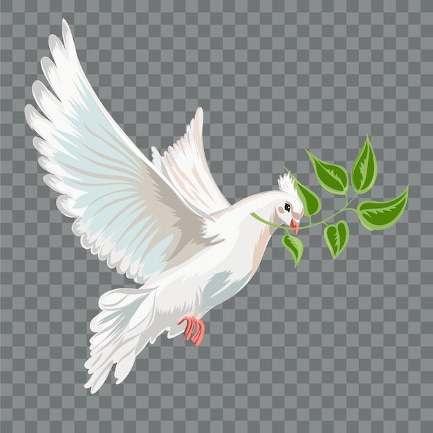 Witte vliegende duif met tak.