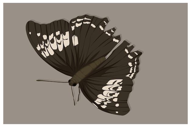 Witte vlinder illustratie