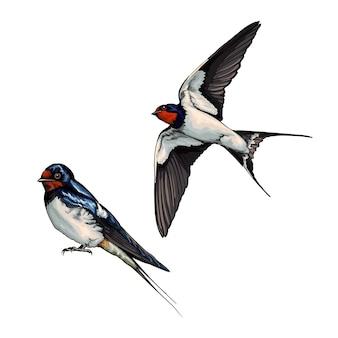 Witte zwaluw tijdens de vlucht van veelkleurige verf splash van aquarel gekleurde tekening