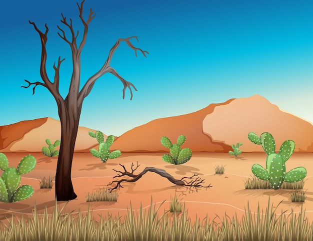 Woestijn met zandbergen en cactuslandschap bij de scène van de dagtijd