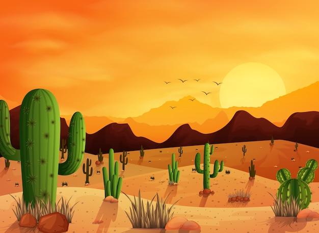 Woestijnlandschap met cactus op de zonsondergangachtergrond