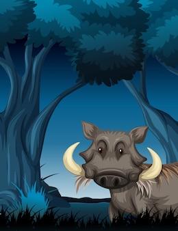 Wrattenzwijn in nachtscène