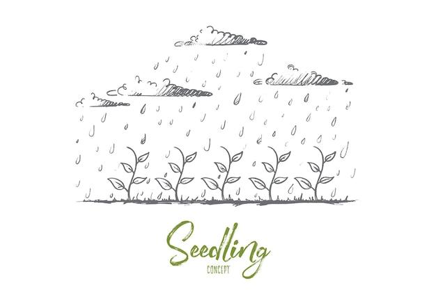 Zaailing concept. hand getekend jonge plant gedrenkt door regen. zaailing groei geïsoleerde illustratie.