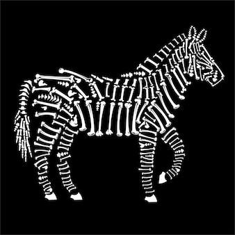 Zebra bones
