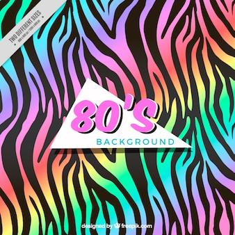 Zebra met regenboog achtergrond