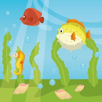 Zee fauna cartoon
