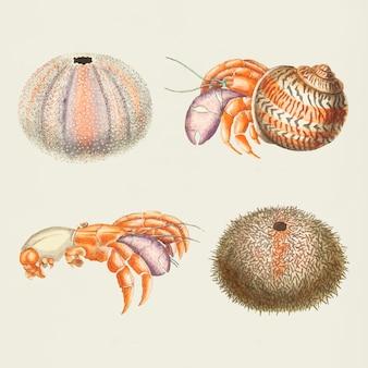 Zeedieren instellen
