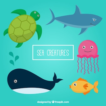 Zeedieren pakken