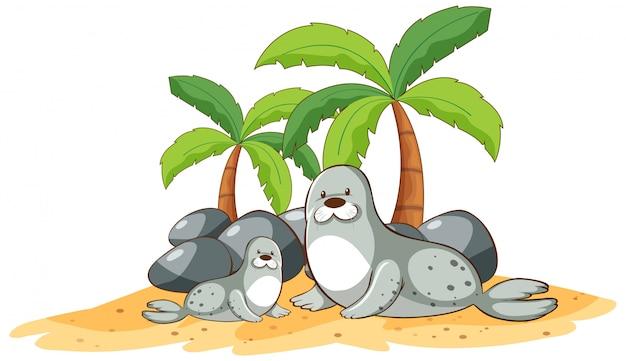 Zeehonden op het strand op een witte achtergrond