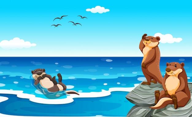 Zeeotter die in de oceaan leeft
