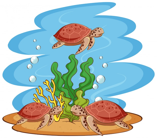 Zeeschildpadden die in de oceaan zwemmen