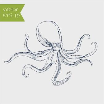 Zeevruchten octopus hand getrokken illustraties geïsoleerd op een witte achtergrond