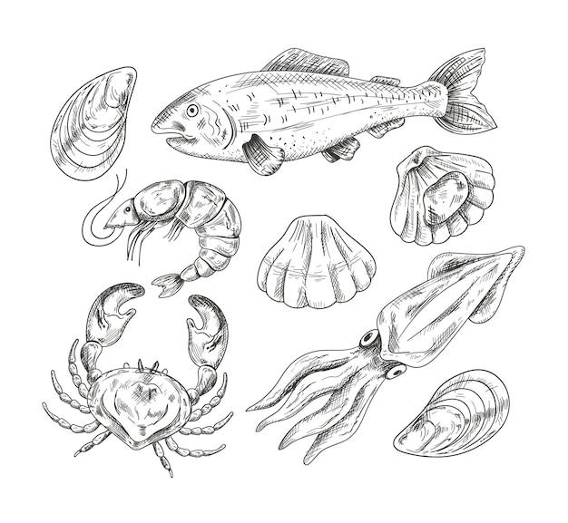 Zeevruchten weekdier zalm vis garnalen shell krab hand draen potloodschets