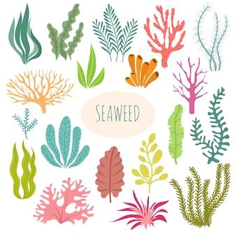 Zeewier. geïsoleerd aquariumplanten, onderwater planten.