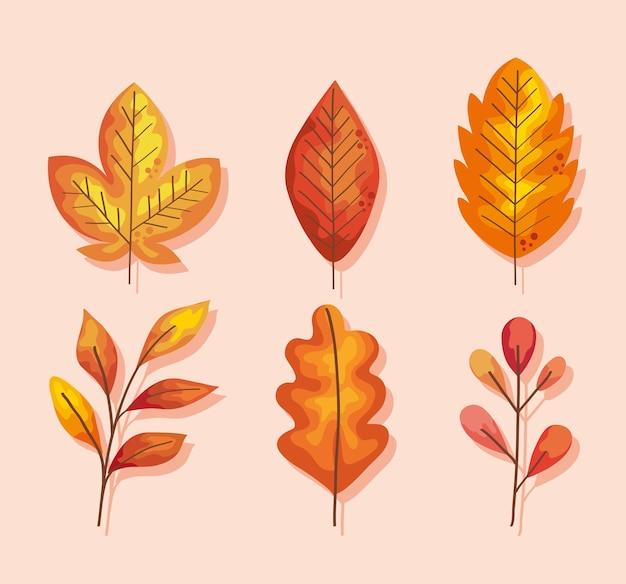 Zes herfstbladeren