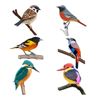 Zes kleurrijke vogels, illustratie