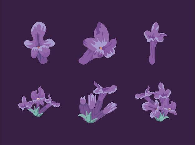 Zes lavendelbloemen