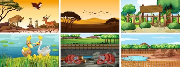 Zes scènes met dieren op verschillende tijdstippen