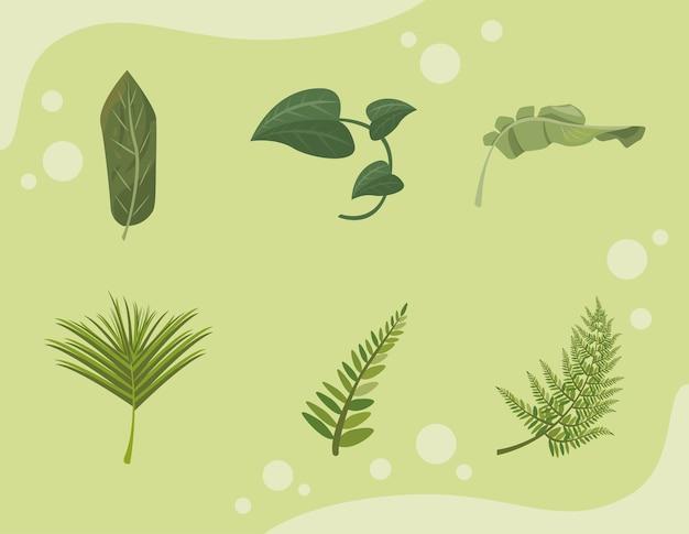 Zes tropische bladeren