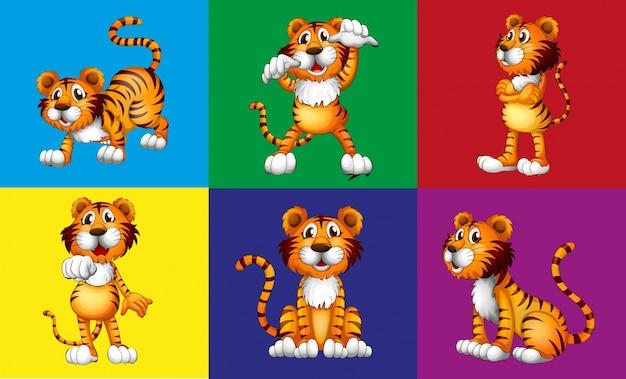 Zes verschillende posities van schattige tijger