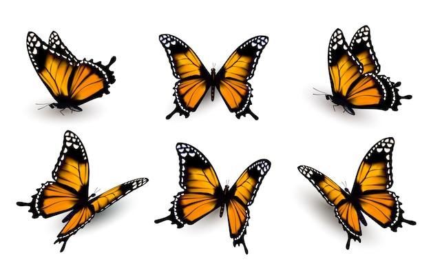 Zes vlinders set