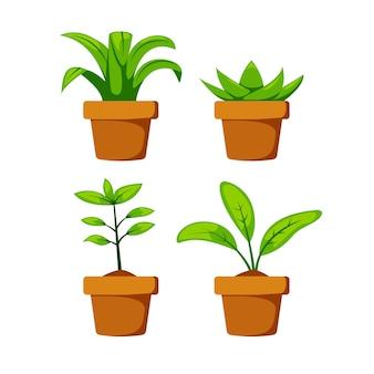 Zet de binnenhuisplant thuis op de pot ter illustratie