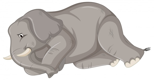 Zieke olifant
