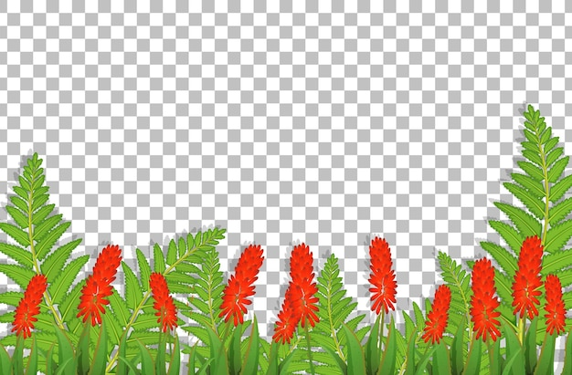 Zilveren hanenkam bloemenveld op transparante achtergrond