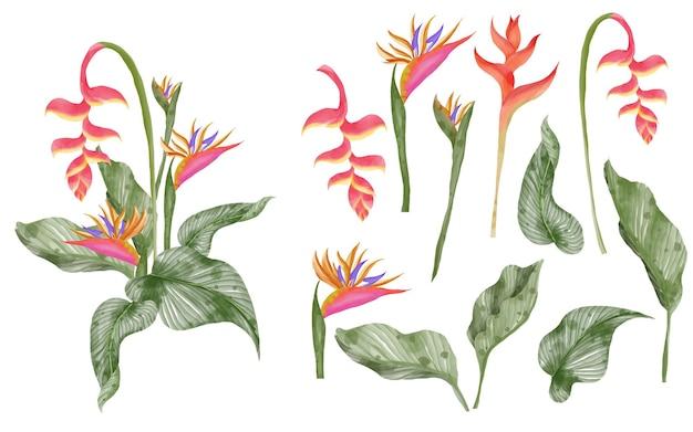 Zomer groen tropisch blad en strelitzia geïsoleerde illustraties aquarel