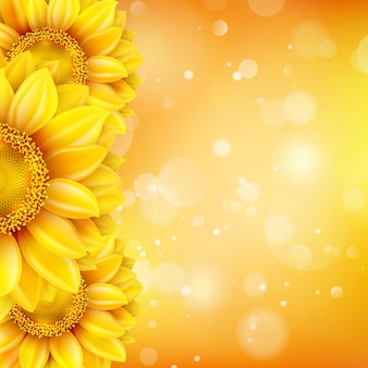 Zonnebloem achtergrond met bokeh.