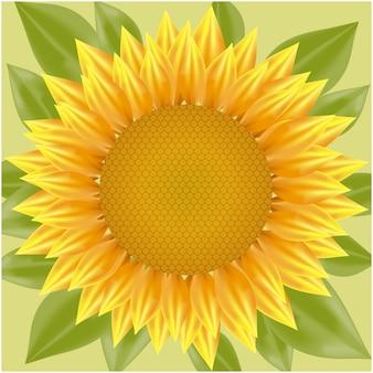 Zonnebloem achtergrond ontwerp