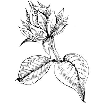 Zonnebloem bloem. floral botanische bloem. geïsoleerd illustratie-element. vector hand tekening wilde bloemen voor achtergrond, textuur, wrapper patroon, frame of rand.