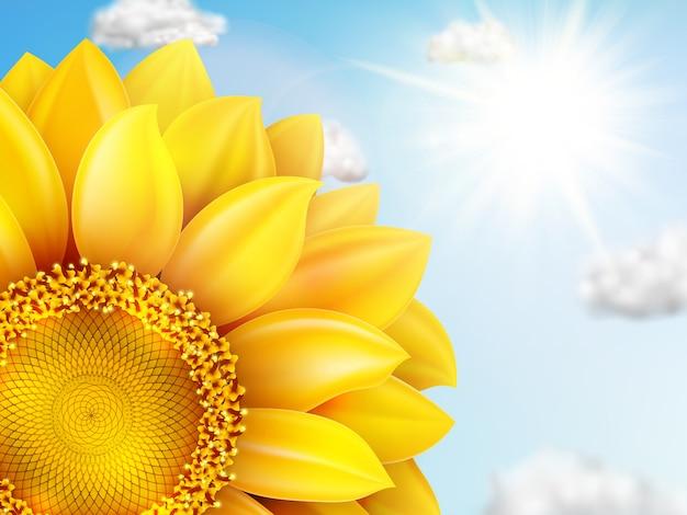 Zonnebloem met blauwe hemel