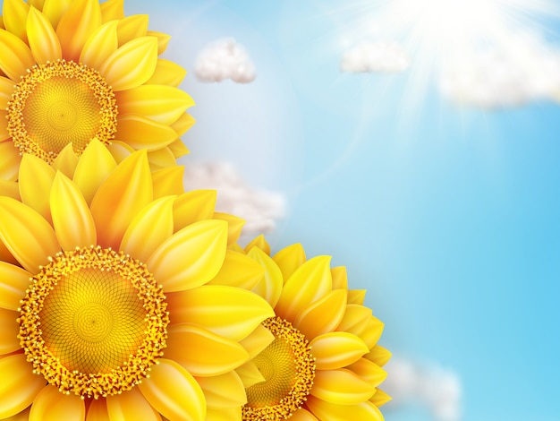 Zonnebloem met blauwe hemel.