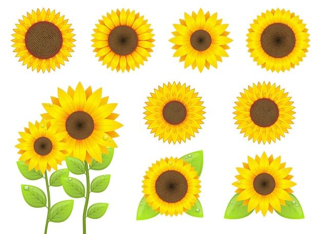 Zonnebloem ontwerp illustratie geïsoleerd