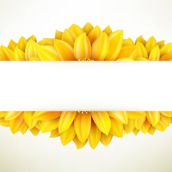 Zonnebloem op witte achtergrond.