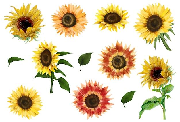 Zonnebloemen en bladeren clipart hand getrokken geïsoleerde illustratie op witte achtergrond