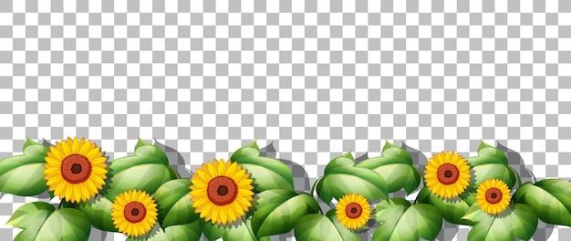 Zonnebloemen en bladeren op transparante achtergrond